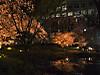 2012_六本木・毛利庭園の夜桜