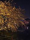2012_吉祥寺・井の頭公園の夜桜